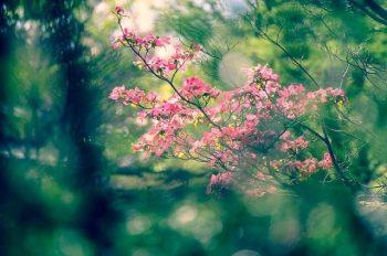 Arboretum-min