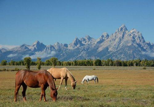 Grand Teton Horseback