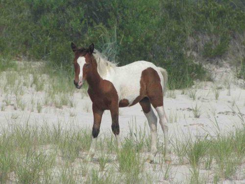 horse-3869871